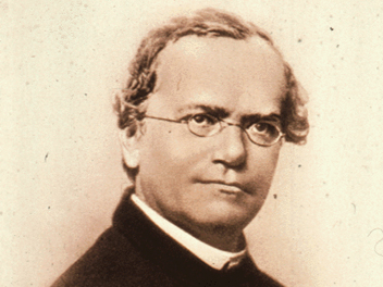 gregor mendel essay Meta: the metamorphosis and gregor essay story can be found in modern families today gregor was a man who sacrifies himself working to pay his father's debts.